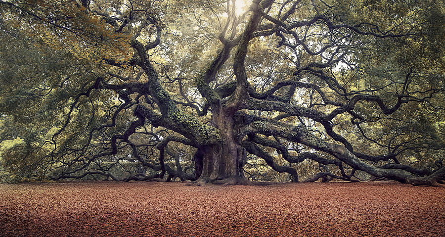 Angel Oak Tree Photograph - Voices Of The Angels by Magda Bognar