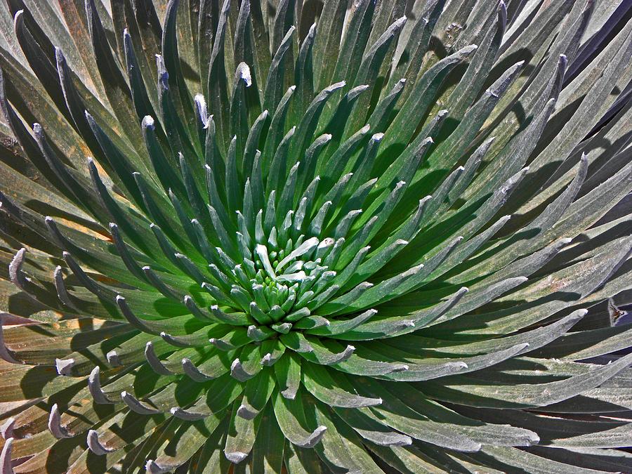 Plants Photograph - Volcanic Beauty I by Elizabeth Hoskinson