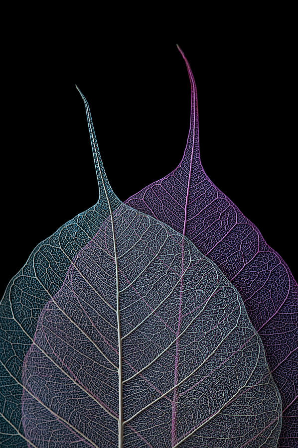 Leaves Photograph - Vulnerability by Maggie Terlecki