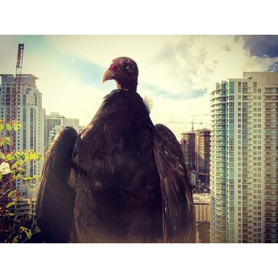 Building Photograph - Vulture Perched On A High Rise Building by Juan Silva