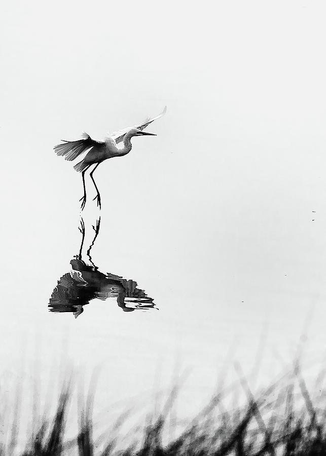 Wafu by Hayato Matsumoto
