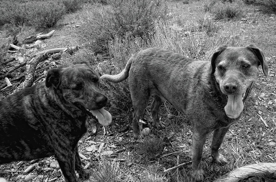 Dogs Photograph - Wagging Tongues by Donna Blackhall