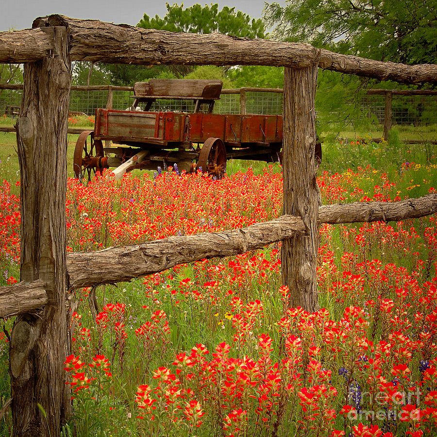 Spring Photograph - Wagon In Paintbrush - Texas Wildflowers Wagon Fence Landscape Flowers by Jon Holiday