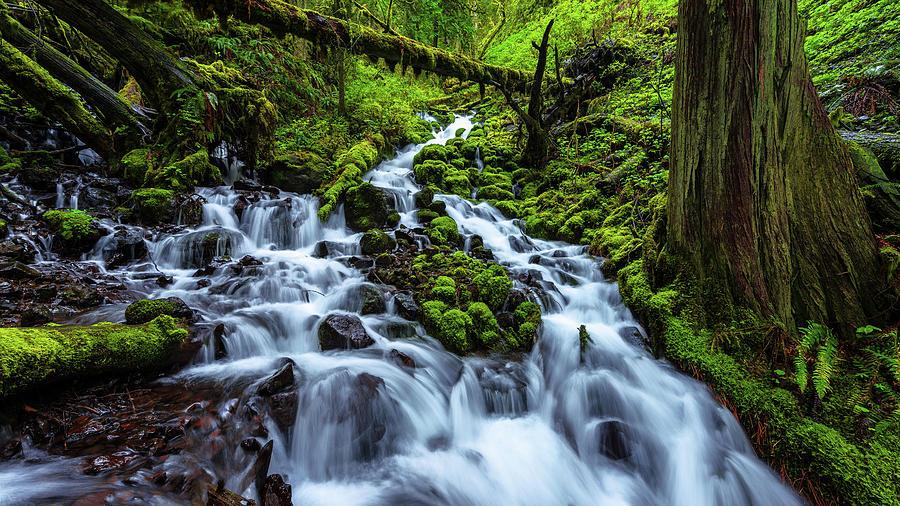 River Photograph - Wahkeena by Chad Dutson