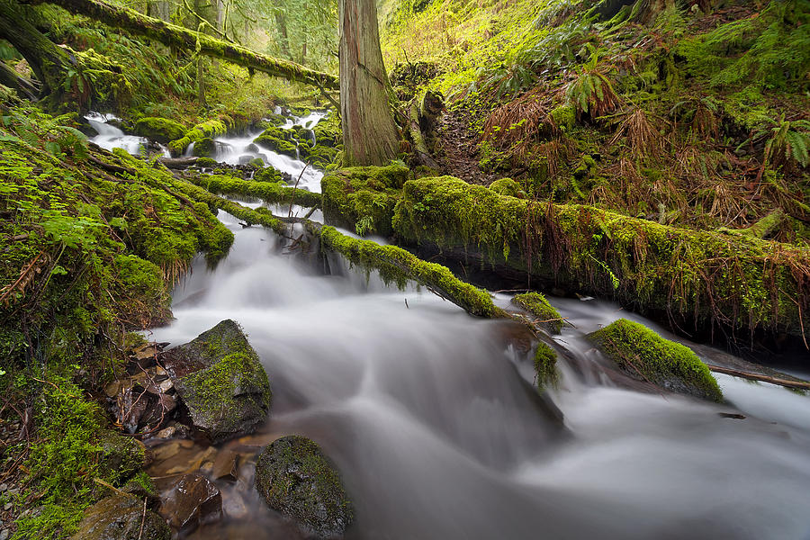 Trail Photograph - Wahkeena Creek In Green by David Gn