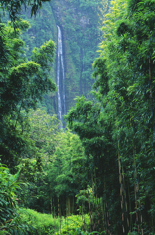 Bamboo Photograph - Waimoku Falls by Dave Fleetham - Printscapes
