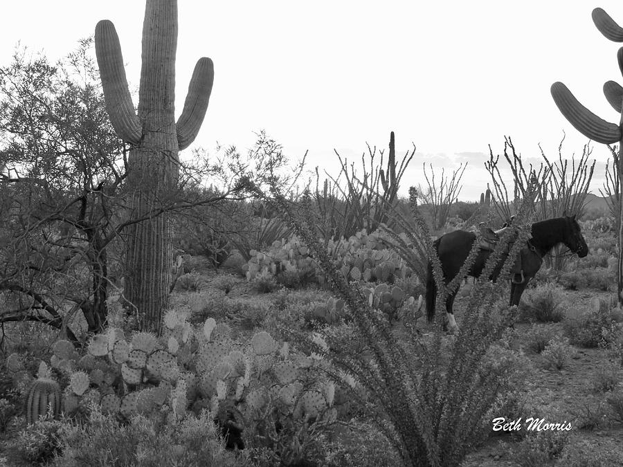 Saguaros Photograph - Waiting For His Human by Beth Morris