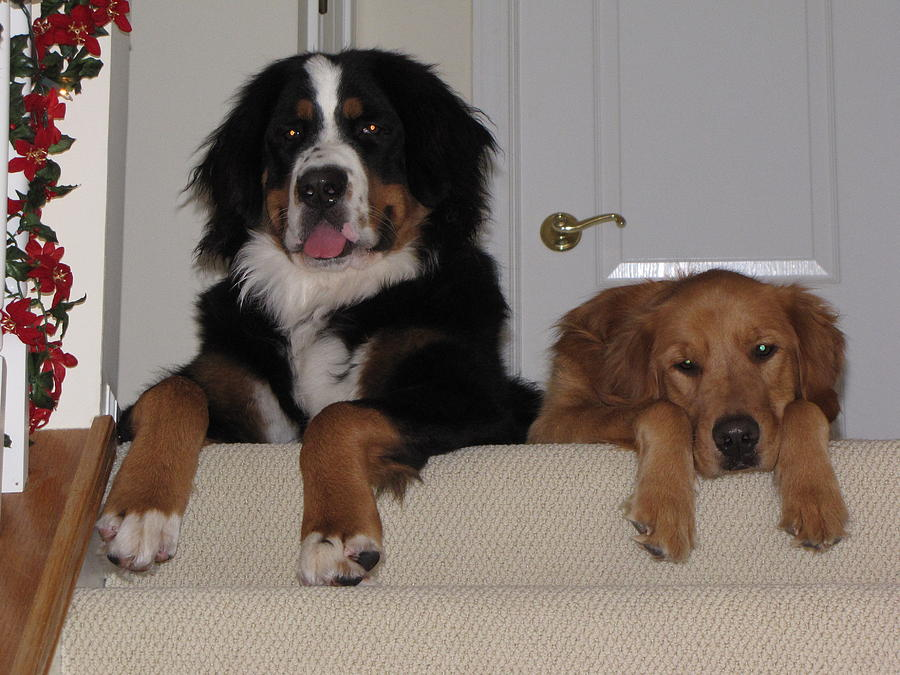 Dogs Photograph - Waiting For Mom by Sylvia Wanty