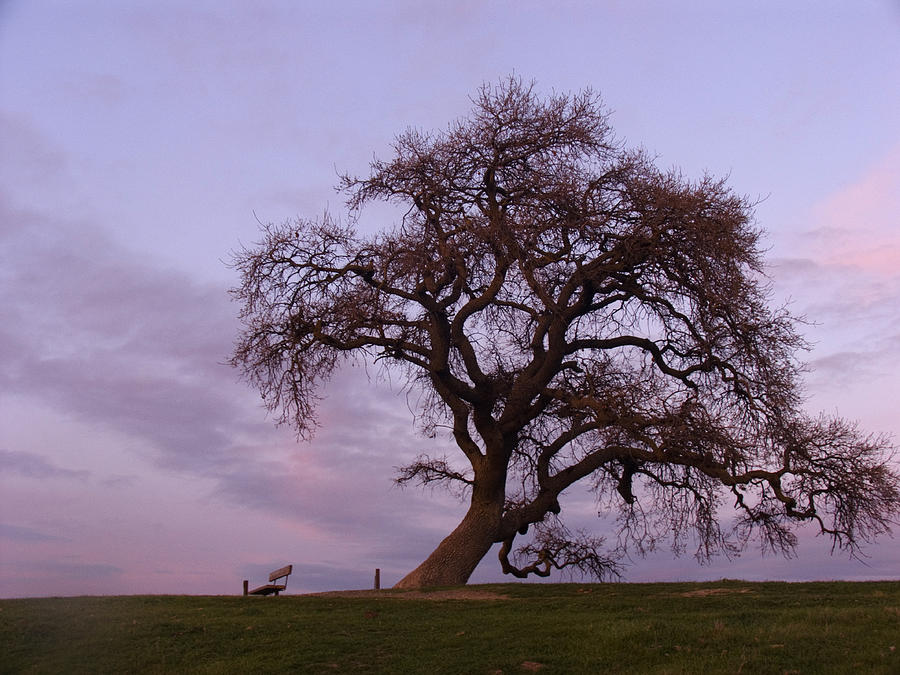 Livermore Photograph - Waiting For Paul by Karen  W Meyer