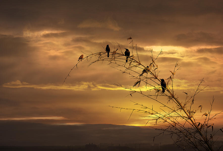 Birds Photograph - Waiting For The Next Day by Gouzel -