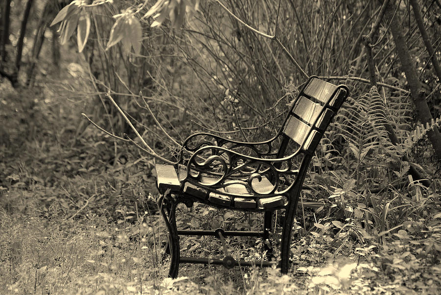 Bench Photograph - Waiting For You by Susanne Van Hulst