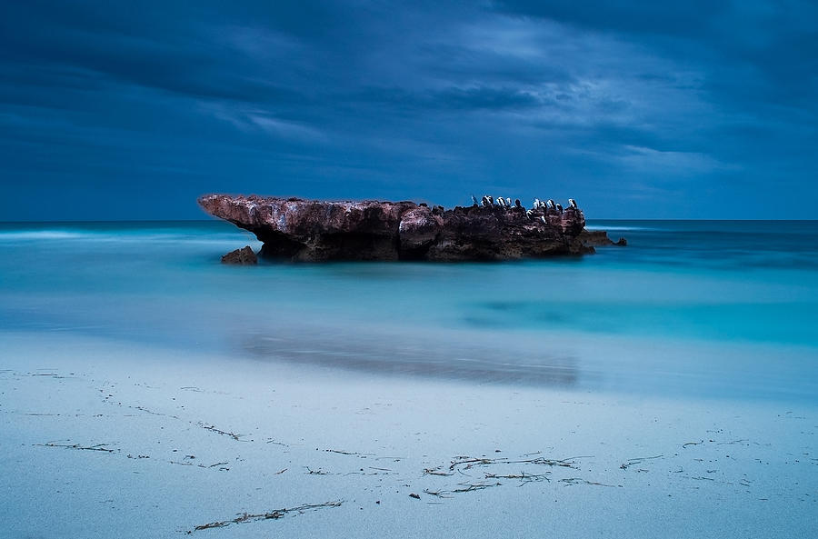 Western Australia Photograph - Waiting In Silence by Heather Thorning