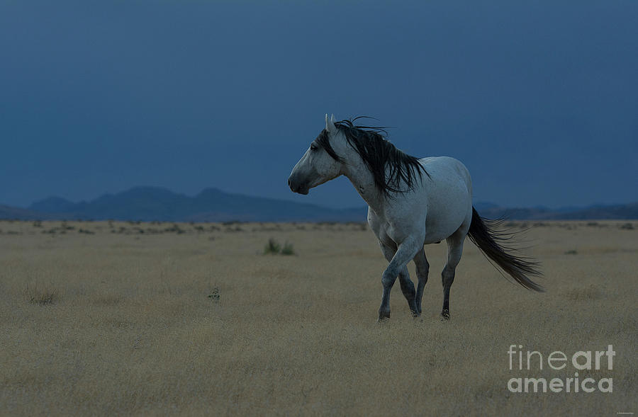Nikon Photograph - Waiting In The Storm by Nicole Markmann Nelson