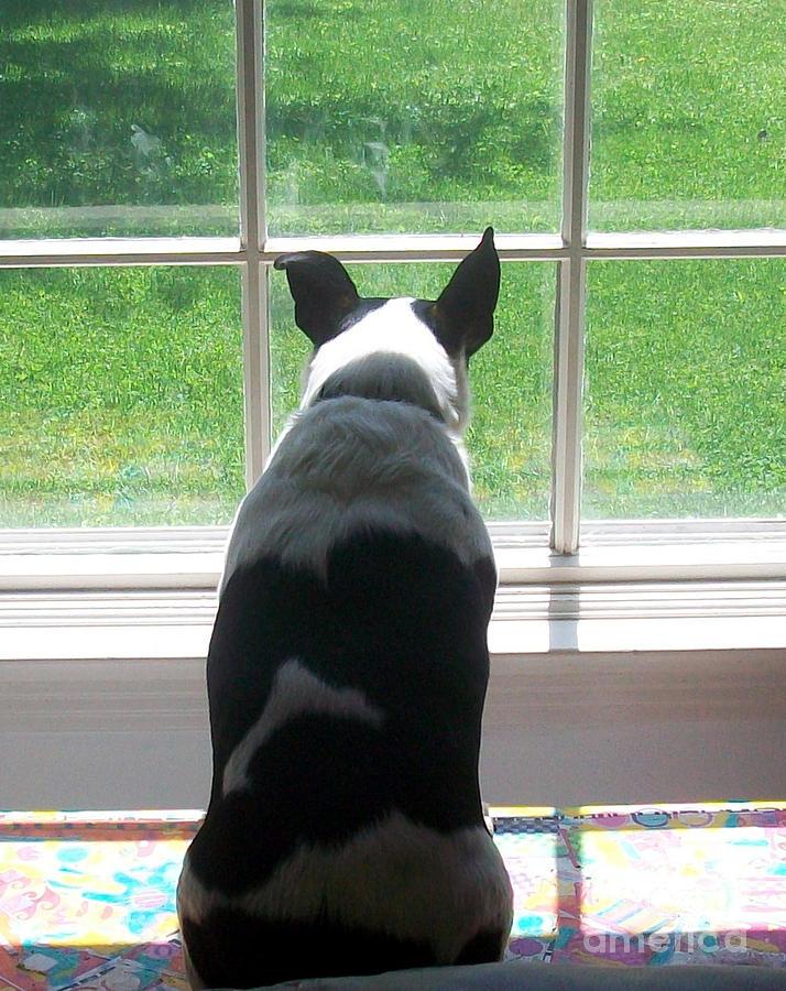 Dog Pyrography - Waiting by Joyce Goldin