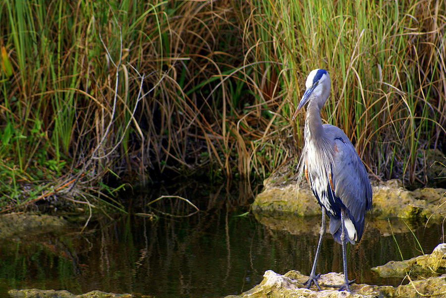 Bird Photograph - Waiting by Marty Koch