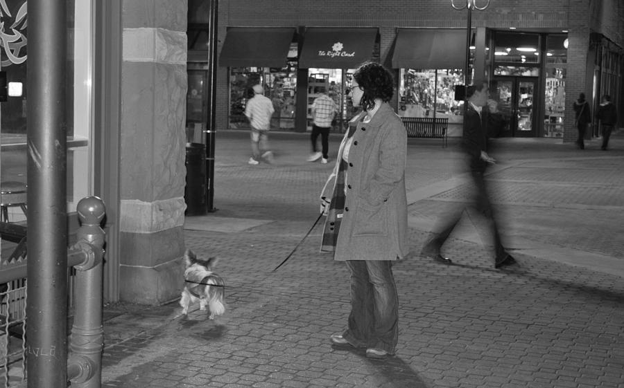 Papillon Photograph - Waiting On The Dog by Luke Cain