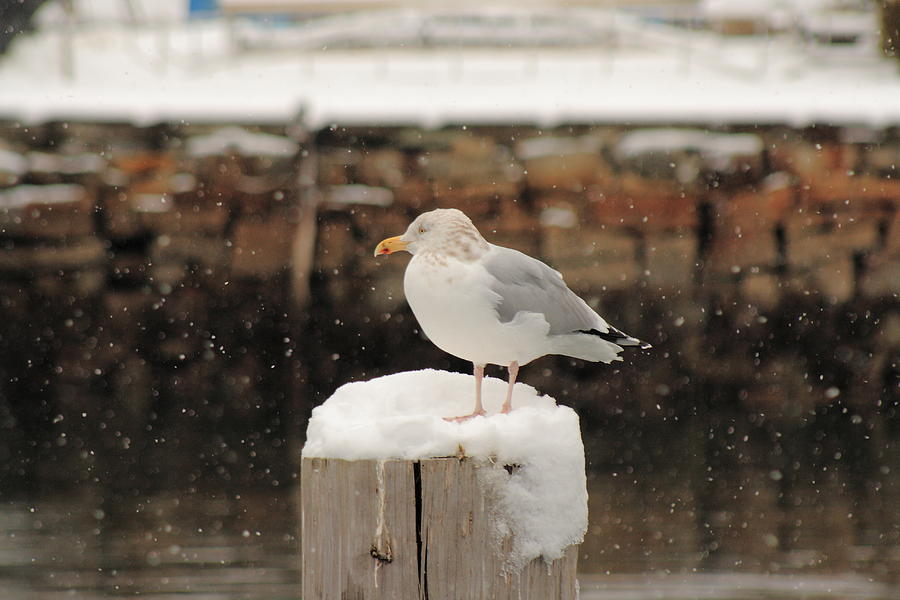 Seascape Photograph - Waiting Out The Snow by Doug Mills