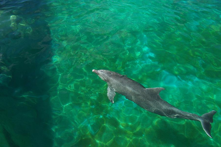 Dolphin Photograph - Waiting Porpoise  by Ronald Lake