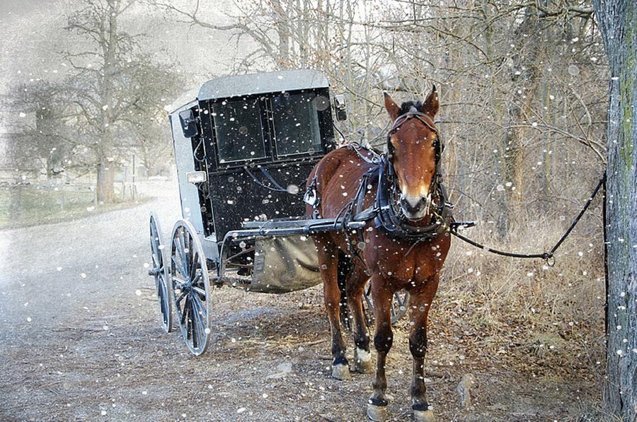 Amish Photograph - Waiting by Stephanie Calhoun