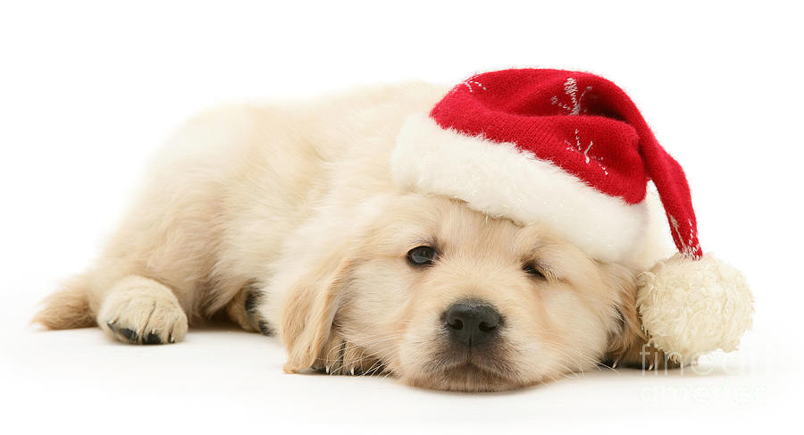 Golden Photograph - Wake Me When Its Christmas by Warren Photographic