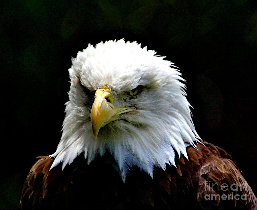 Eagle Photograph - Wake Up America by Robert Pearson