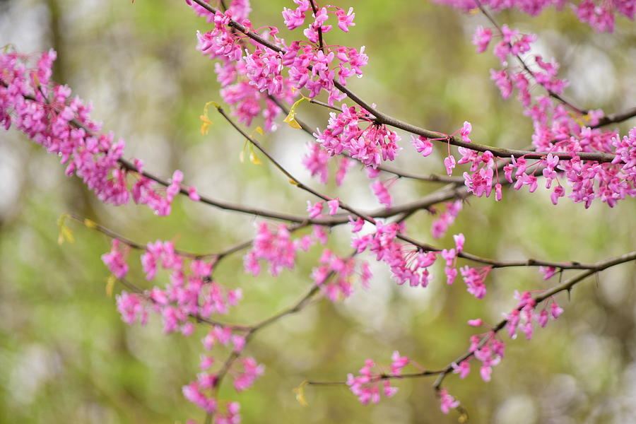 Spring Photograph - Waking Blooms by Melissa Carter