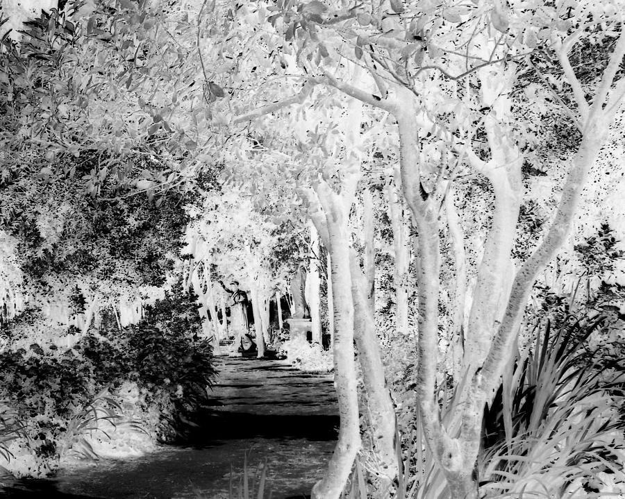 Fantasy Photograph - Walk In The Dark by Dana Patterson