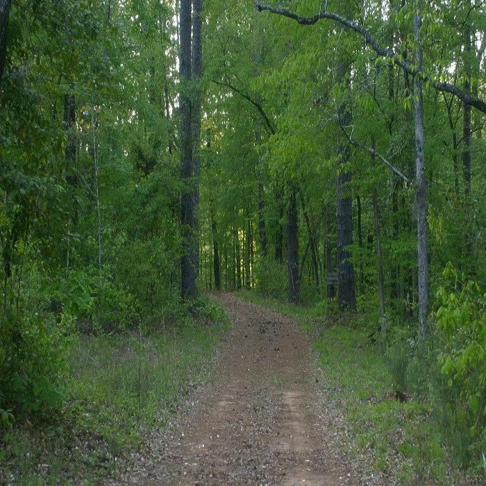 Walk Photograph - Walk In The Woods by Carla Fionnagain