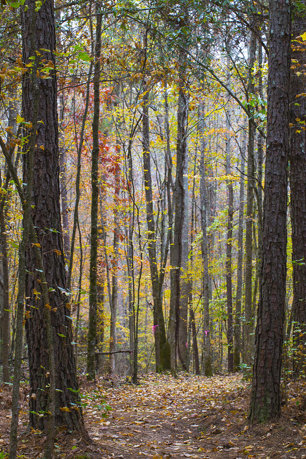 Georgia Photograph - Walk In The Woods by Keith May