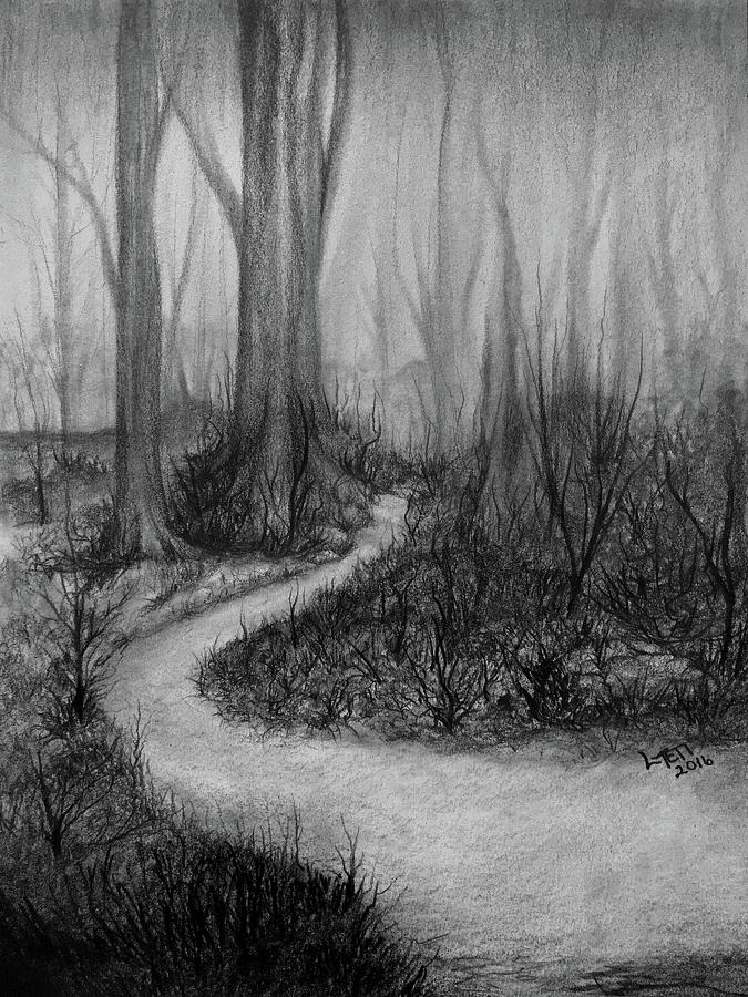Walk In The Woods Drawing By Laura Teti