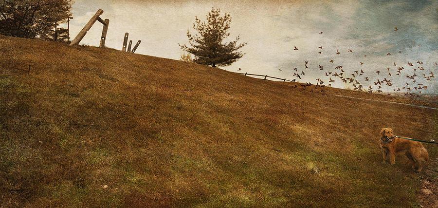 Birds Photograph - Walk by Inesa Kayuta