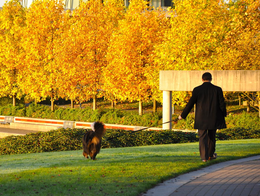 Fall Photograph - Walkies in Autumn by Caroline Reyes-Loughrey