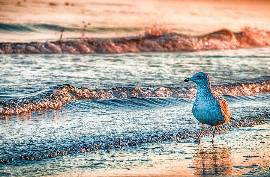 Ocean Photograph - Walking On Sunshine by Mathias Janke