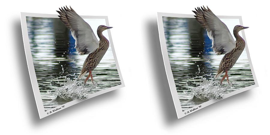 3d Photograph - Walking On Water - Gently Cross Your Eyes And Focus On The Middle Image by Brian Wallace