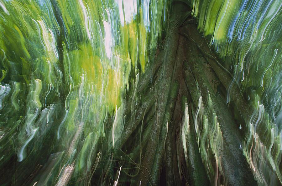 Walking Palm Panama Photograph by Christian Zielger