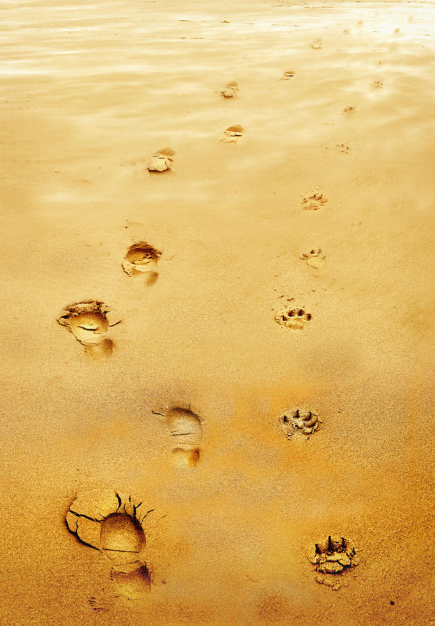 Walking The Dog Photograph - Walking The Dog by Mal Bray
