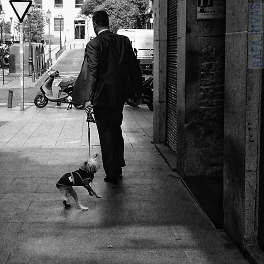 Suit Photograph - Walking The Dog  #man #people by Rafa Rivas