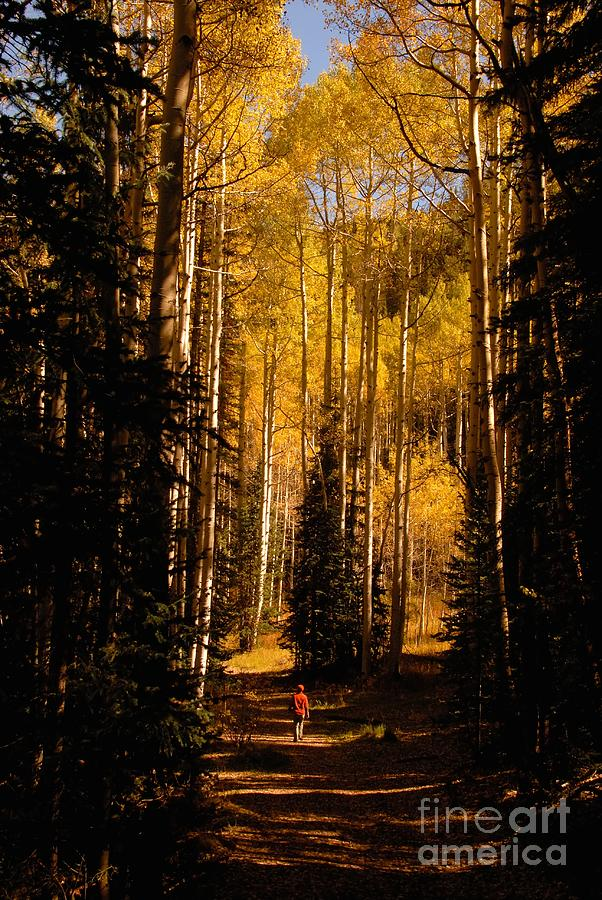 Landscape Photograph - Walking With Aspens by David Lee Thompson
