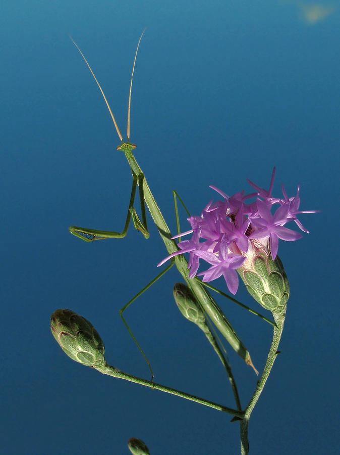 Nature Photograph - Walkingstick by Peg Urban