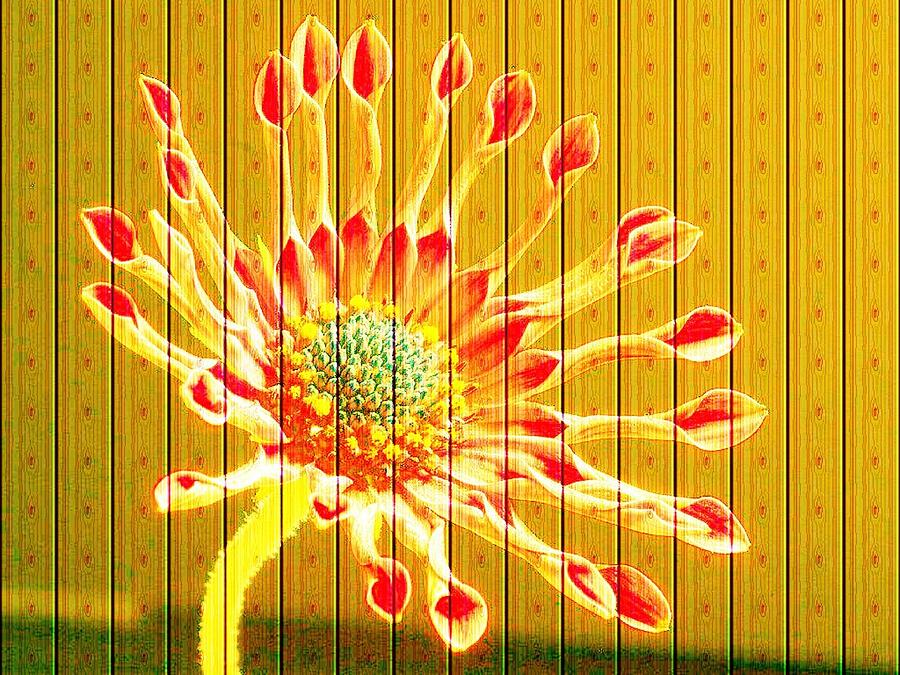 Flower Photograph - Wall Flower by Tim Allen