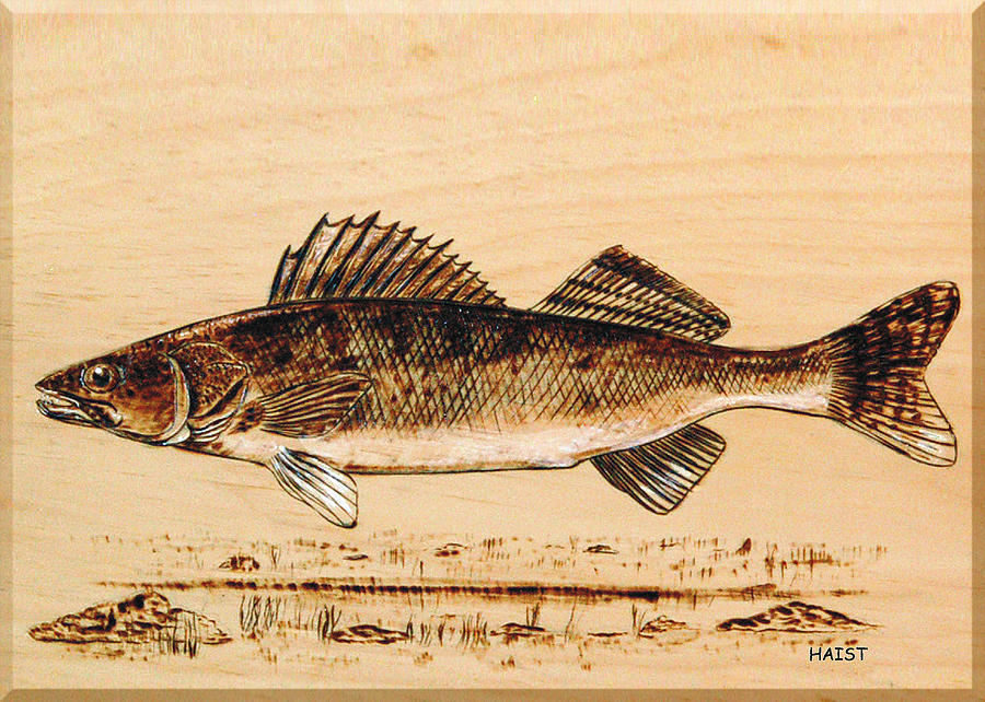 Walleye Pyrography - Walleye by Ron Haist
