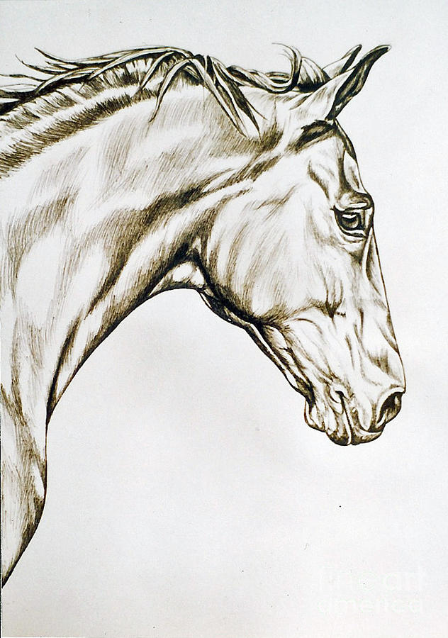 Horse Drawing - Wally by Suzanne Leonard