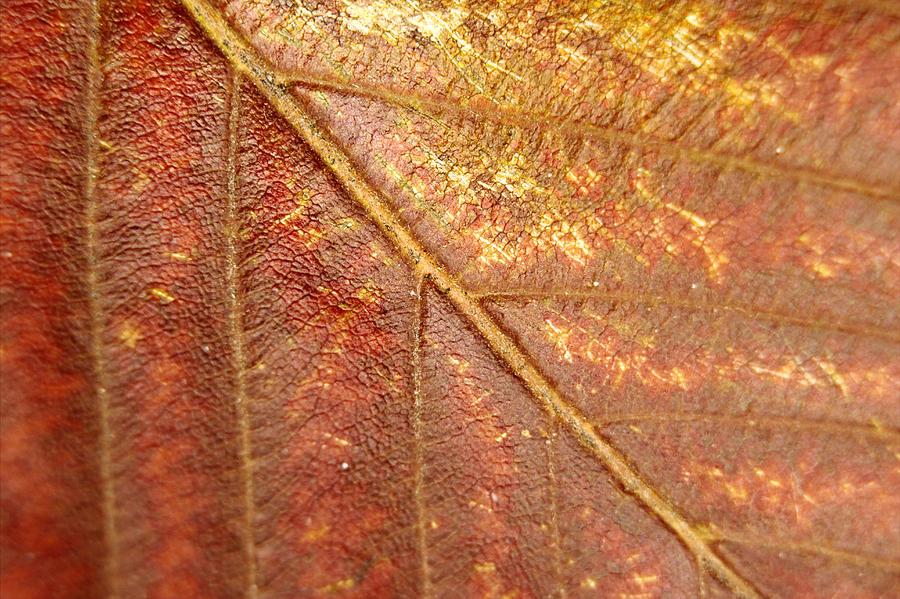 Walnut Leaf Photograph