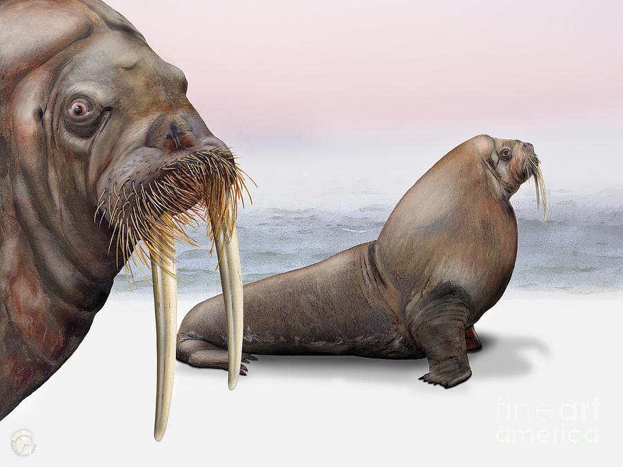 Walrus Odobenus Rosmarus - Morse - Morsa - Tricheco - Mursu - Rostungur - Ivory Tusks - Inuit Painting