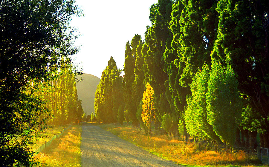 Wanaka Photograph - Wanaka Morning Light by Kevin Smith