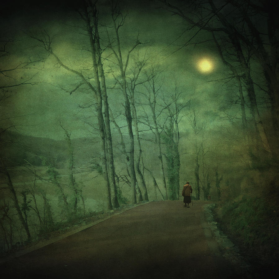 Forest Photograph - Wanderer by Zapista