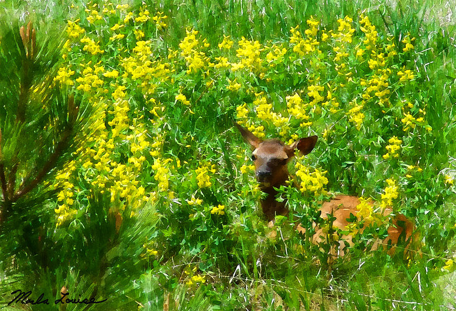 Elk Photograph - Wapiti And Flowers by Marla Louise