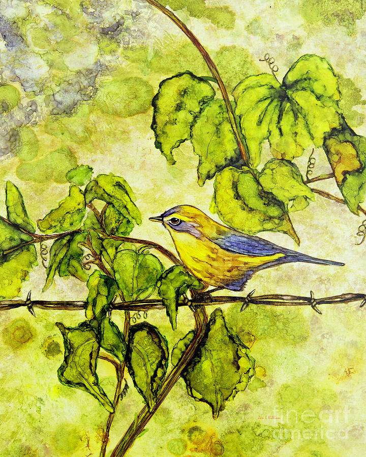Warbler by Jan Killian