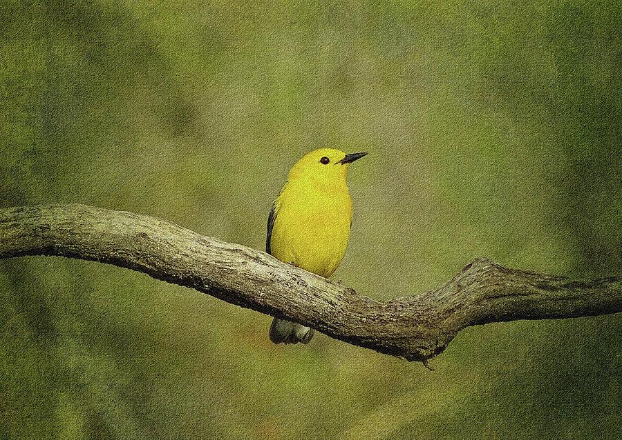 Warbler by Sandy Keeton