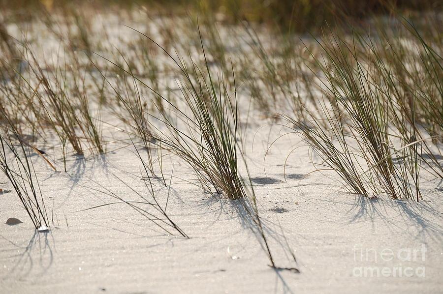 Warm Sands by Waverley Manson